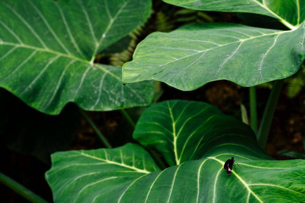 Plants fauna