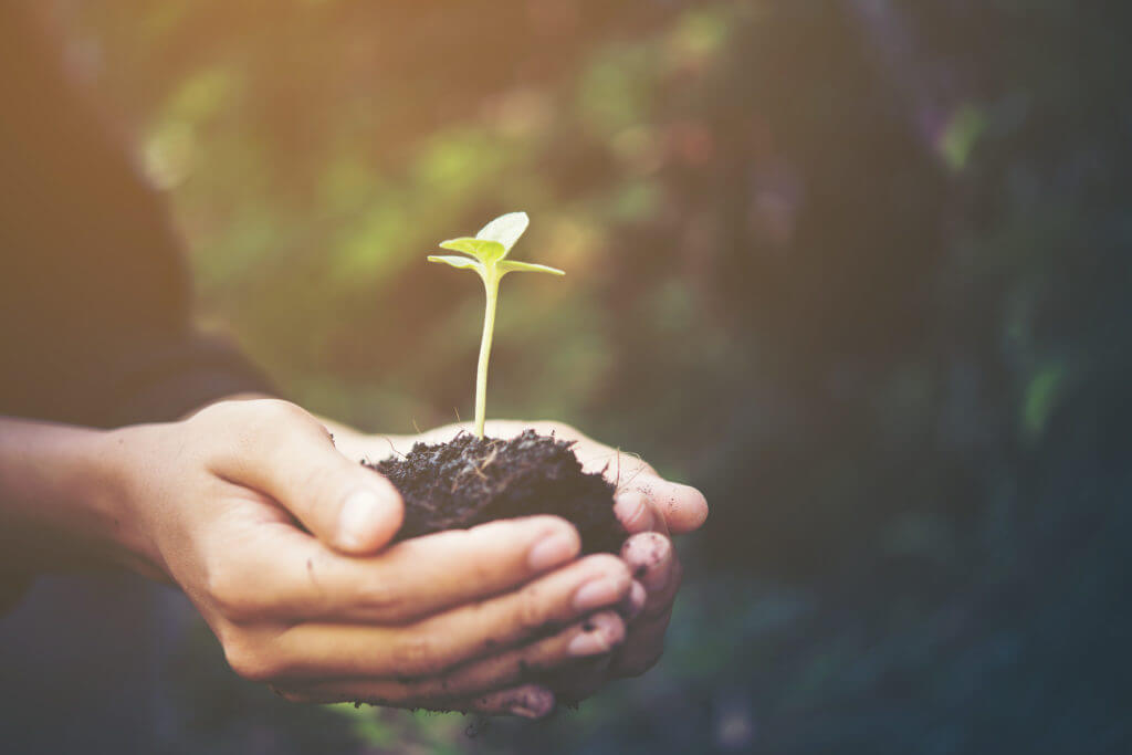 plant in hands give to the world